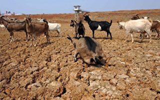 旱情加剧水源危机 云贵多人找水丧生