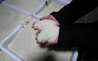 基因稻米中國掀論戰:我的餐桌誰做主