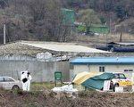 口蹄疫蔓延至韩国内陆中心忠州,韩国当局忧虑疫情扩展至全国范围,4月22日在韩国忠州市,政府防疫要员们实施防疫作业。ⓒ PARK YOUNG-DAE/AFP/Getty Images