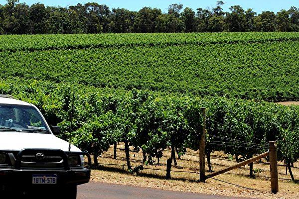 中共再报复 对澳洲葡萄酒加征212%关税