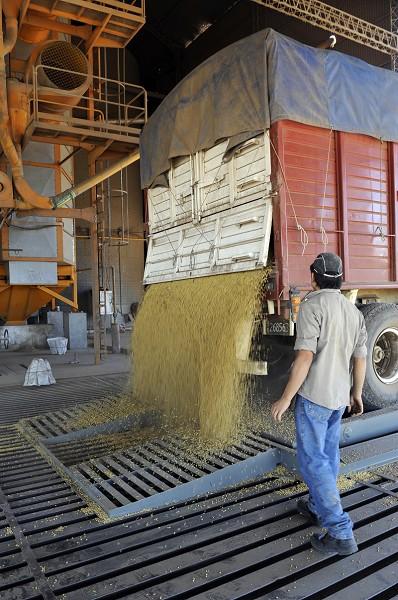 大量進口導致中國大豆業近崩潰