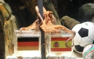 章鱼保罗神准! 预测德国足赛应验