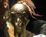 """章鱼保罗获颁世足冠军奖杯""""大力神杯"""",以表扬它的神算奇迹。(AFP)"""