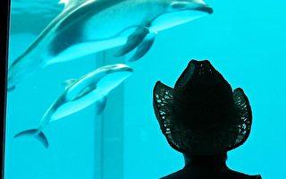 美国家水族馆邀请您与海豚共度夜晚