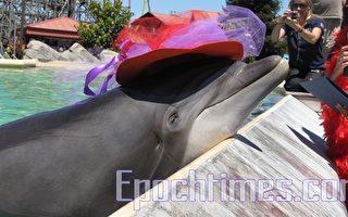六旗主题公园欢庆50岁海豚生日