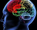 医学上也认识到人类大脑有百分之七十以上没有开发。(摄影:V. Yakobchuk/Fotolia)