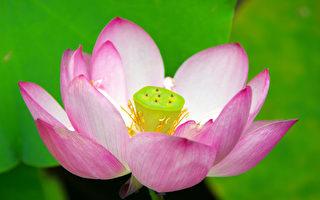 一闭上眼睛 眼前出现一朵大莲花