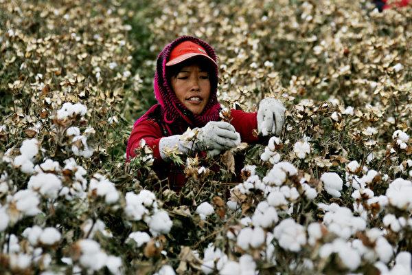 美宣布禁止進口新疆所有棉花及番茄產品