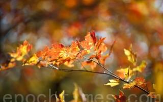 跟着秋天的温度,跟着秋天的风,跟着秋天的心情 演一出...秋季恋歌。(戴兵 /大纪元)