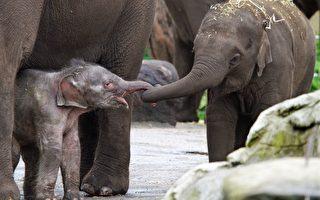 新生小象打招呼