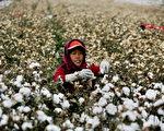大陸棉價上漲 棉花被摻磚頭 廠家停購