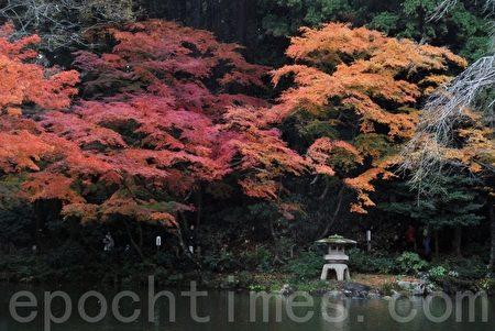成田山新胜寺的红叶(摄影: 木雨 / 大纪元)