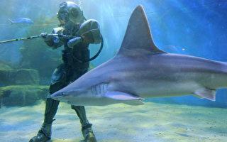 研究:鲨鱼色盲 浅色泳衣或可防鲨