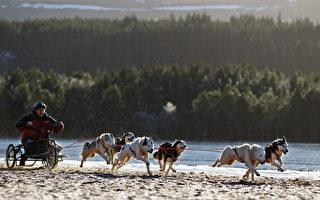 2011年1月20日,英国阿维莫尔举行雪橇犬竞逐比赛(Jeff J Mitchell/Getty Images)