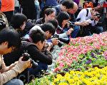 香港花卉展(摄影: 潘在殊/大纪元)