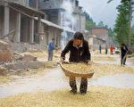 作为一个人口大国,粮食安全与粮价问题当然是重中之重,不然也不会有18亿亩耕地红线之说。图农民辛苦劳作一年,也只能净挣两三千元(AFP)