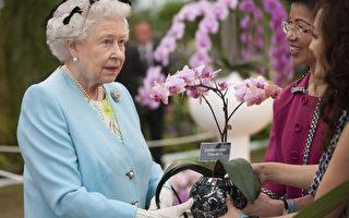 組圖:台灣蘭花閃亮切爾西花展 英女王驚艷