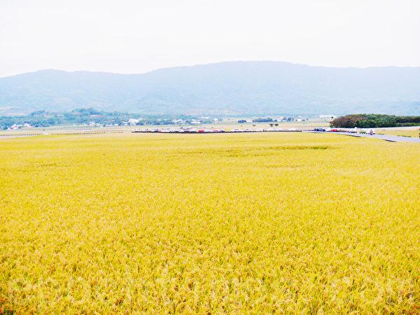 稻穗音乐节