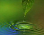 当我们明白了什么是科学定义后,自然就明白植物和水有思维是完全可能的,只是以前没有认识到而已。(摄影:James Steidl /Fotolia)