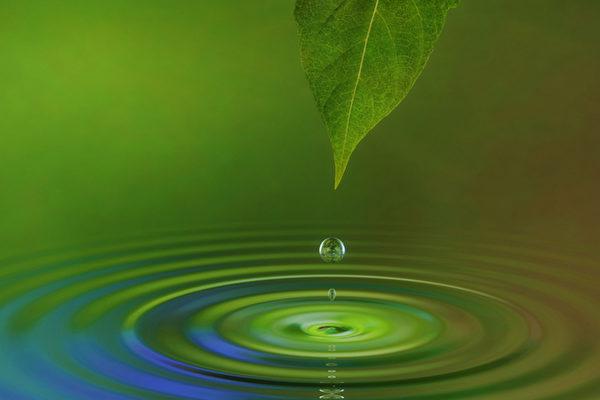 當我們明白了什麼是科學定義後,自然就明白植物和水有思維是完全可能的,只是以前沒有認識到而已。(攝影:James Steidl /Fotolia)