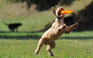 狗狗向前冲,下一秒超惊人的跳跃爆发力,让人看得目瞪口呆!