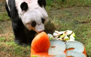 佳佳在吃冰雕蛋糕。(图:海洋公园提供)