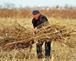 按世界银行人均日消费一美元的标准,中国农村贫困人口仍然高达1.5亿。(AFP)
