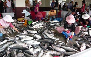感恩啊!乌鱼节看到大鱼堆如山。(摄影:彭瑞兰/大纪元)