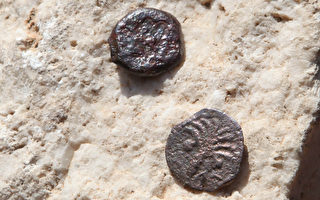 以色列考古學家23日公佈新出土的古銅幣,銅幣顯示的鑄造年代,足以改變第二聖殿的記載歷史。(攝影:GALI TIBBON/AFP/Getty Images)