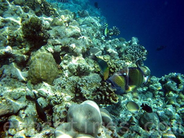 馬爾代夫的珊瑚礁和熱帶魚(攝影:GS/大紀元)