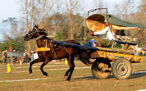 """第八届""""国际大象节""""12月26日在尼泊尔举行,为期三天的活动除了大象比赛外,还有马车与牛车等赛事。(STR: PRAKASH MATHEMA / AFP ImageForum)"""