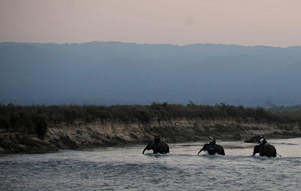 """第八届""""国际大象节""""12月26日在尼泊尔举行,大象们渡河前往参赛。(STR: PRAKASH MATHEMA / AFP ImageForum)"""