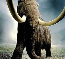 猛獁象 (網絡圖片)