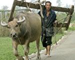 在政府眼里,农村、农民就是不过如此,就是贫贱的命。中共歧视了几十年,农民被盘剥了几十年,贫穷了一辈子,低贱了一辈子,贡献了一辈子。(Stringer: LIU JIN / AFP)