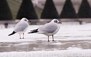 寒雪中的鸟(易恒/大纪元)