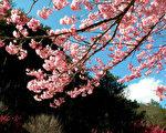 台湾古典诗:春意寄怀