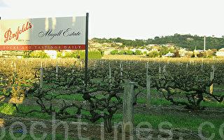 南澳頂尖釀酒師獲頒世界最佳釀酒師獎