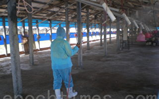彰縣動物防疫所對傳出疫情的養雞場進行消毒作業與監控。(攝影: 郭益昌/ 大紀元)