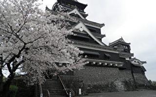 組圖:日本九州櫻花盛開