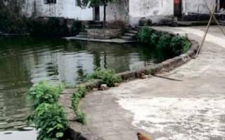 鐘池位於八卦村中央,一半水塘一半陸地,使其構成了極具象徵意義的魚形太極圖。圖為鐘池一隅。(大紀元)