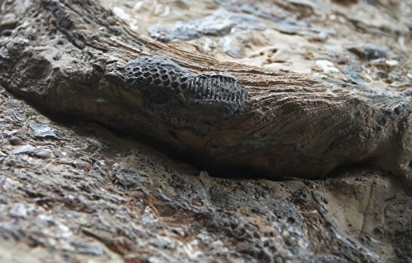這顆重達200多公斤的巨大石頭上有小人鞋印,鞋跟鞋掌紋路非常清晰(攝影:許享富/大紀元)