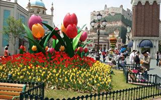 美籍華人在韓國 春遊愛寶樂園