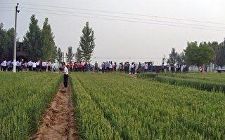 河北土地被强征 200亩麦田变草地