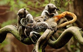 全球十大最珍贵濒危地点 亚马逊雨林(5)