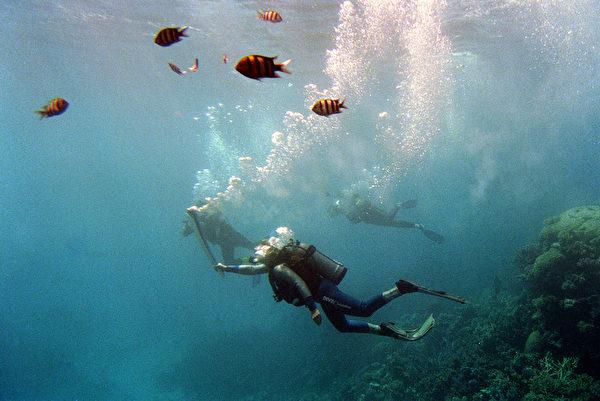 據當局估計,大堡礁美景每年吸引的觀光客商機約為54億美元。(Adam Pretty/ALLSPORT/Getty Images)