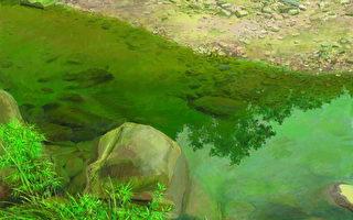 《遺俗》116.5x90cm,2008,油畫,麻布。頑石出水似芙蓉,天光徘徊雲景從,翠影浮波接芳草,幽境暫遺世俗中。(圖片:畫家提供)
