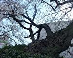(摄影:古容/大纪元)