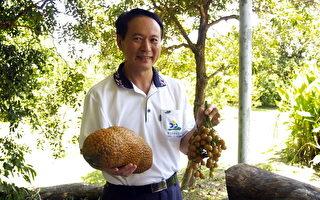 屏東科技大學農園生產系教授顏昌瑞致力果樹研究30多年,貢獻卓著,獲選2012國際同濟會台灣總會第36屆全國十大傑出農業專家。(屏東科技大學提供)