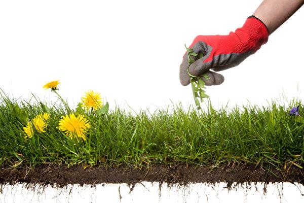 整理花园看似不会危害健康,事实上,蹲下和挖土的动作会造成身体很大的负担,记得要以护膝垫保护膝盖,经常换手、变换姿势。(摄影:/Fotolia)