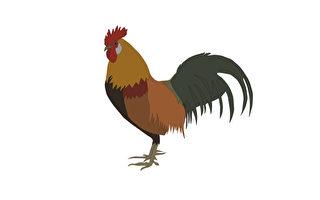 他为官清正,但本性喜欢吃鸡,已经很多年了。(Fotolia )